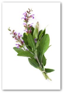 fresh sage with flowers