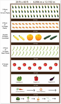 basic 20 x 40 vegetable garden plan