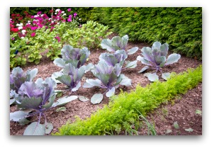 free vegetable garden plans and ideas