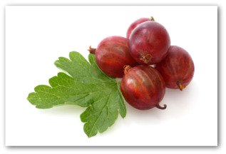 how to cut back gooseberries