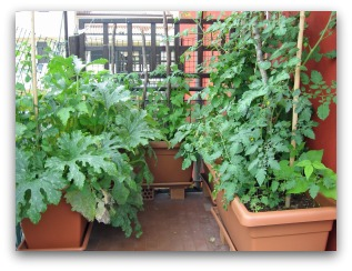 Balcony Container Vegetable Garden Layout