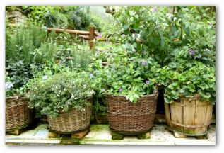 containers of herbs and plants in a small vegetable garden