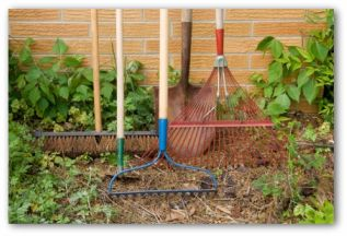 vegetable garden tools ready for use in the garden