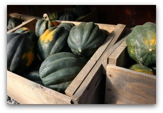 acorn squash harvest and storage