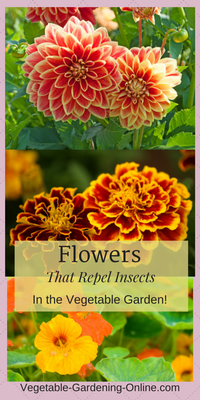 companion planting flowers in vegetable garden organic pest control