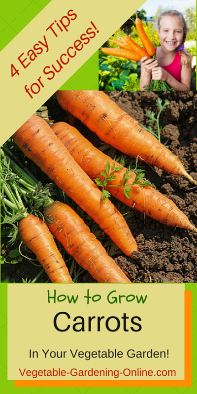 tips for growing straight, sweet carrots in the vegetable garden