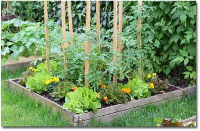 small raised bed backyard garden