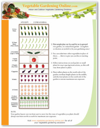 4 X 20 Free Vegetable Garden Plan