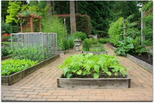 raised bed vegetable garden layouts