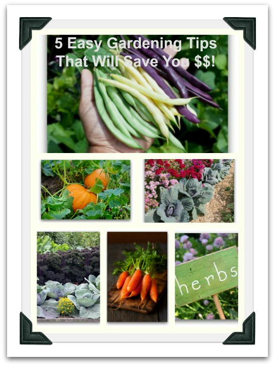 easy gardening tips that will save money