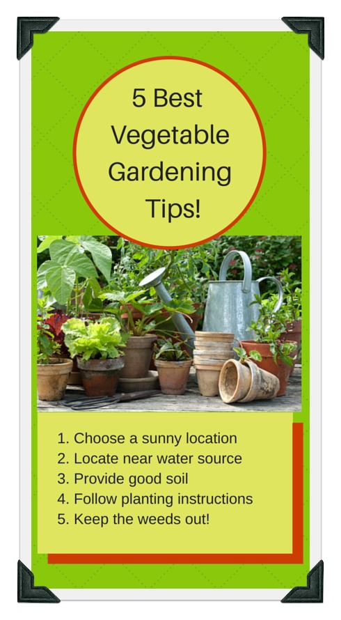 5 most important vegetable gardening tips for success