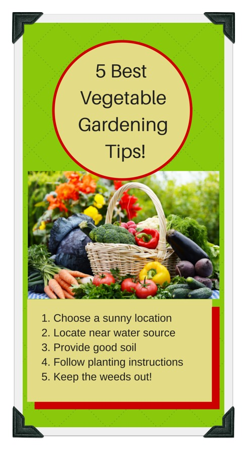 5 easy gardening tips that will save time and money