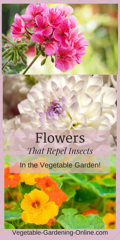 flowers as companion plants in raised bed vegetable gardens
