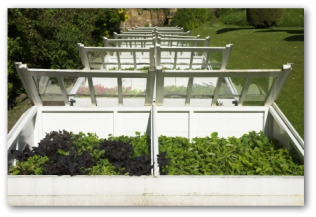 raised beds growing vegetables outside