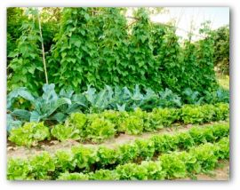 vegetable garden design plans free
