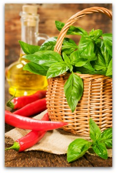 fresh basil can be stored in oil for winter use