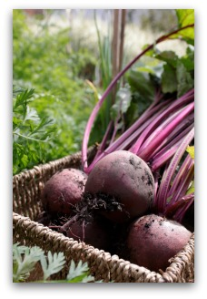 Delicious Beets from the Garden
