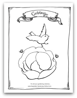 printable cabbage coloring page