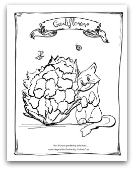 Printable Cauliflower Coloring Page