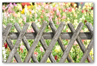 cheap garden fences