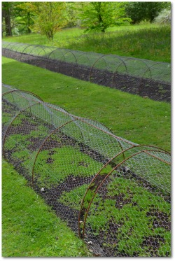 chicken wire fence covering vegetable garden