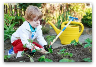 helping plant a small vegetable garden