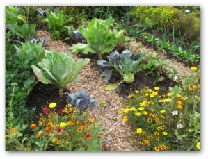 companion planting vegetable garden
