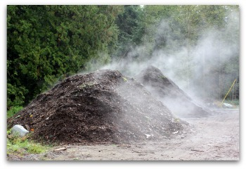 horse manure compost decomposing in garden