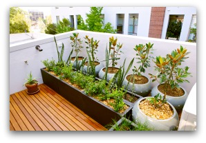 balcony container garden example