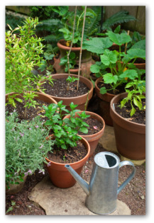 growing container vegetable gardens
