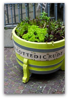 fun container vegetable garden idea