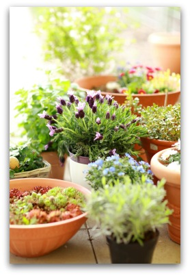 indoor container herb garden