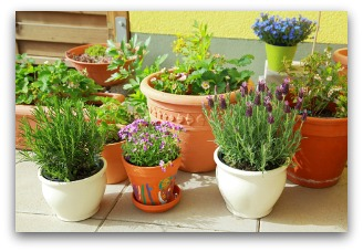 indoor container gardening tips and ideas