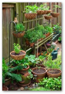 Pot Garden Ideas earth bermed pots with heavy mulch keep plant roots cooler Container Vertical Vegetable Gardening