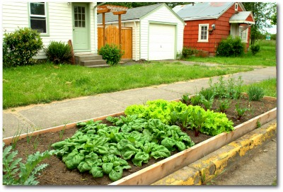 urban curb strip raised bed vegetable garden