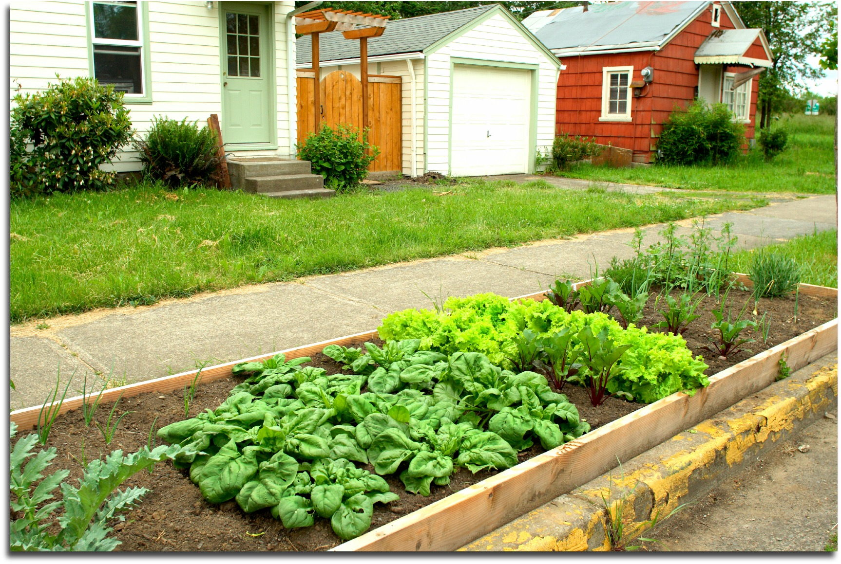 Gardening Tips For Beginners. Small City Garden In Curb Strip