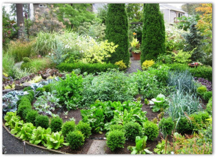 free garden layout designs, Garden idea