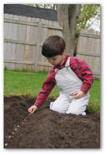 little boy planting garden seeds