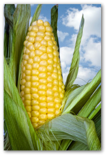 Freezing Corn From Your Garden