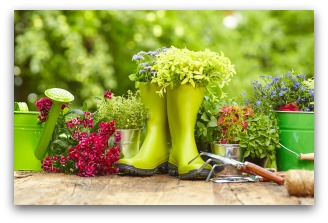 spring vegetable garden tips