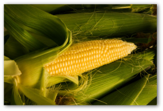 Growing Corn In Your Home Garden
