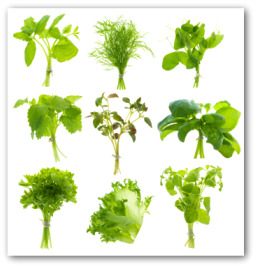 fresh herbs - Vegetable Garden Ideas For Minnesota