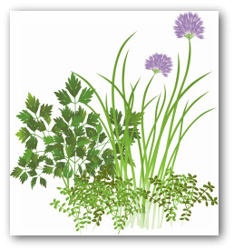 parsley and chive print