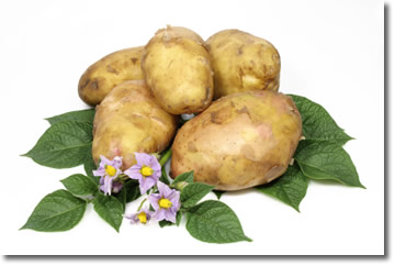 fresh potatoes and leafs