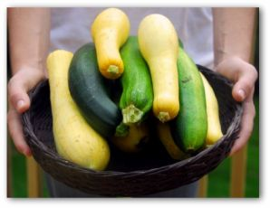 zuchinni and crooked neck squash