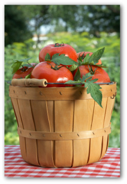 basket of fresh tomatoes