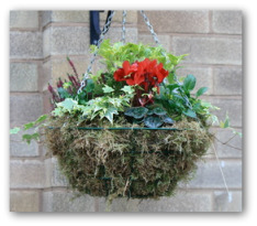 moss lined hanging basket with plants and flowers