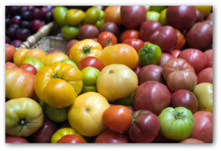 heirloom tomato varieties including Cherokee Purple
