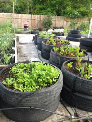 Small Vegetable Garden Ideas >> Henry Reed's Recycled Tire Container Garden