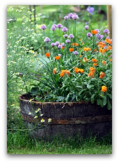 herb garden barrel